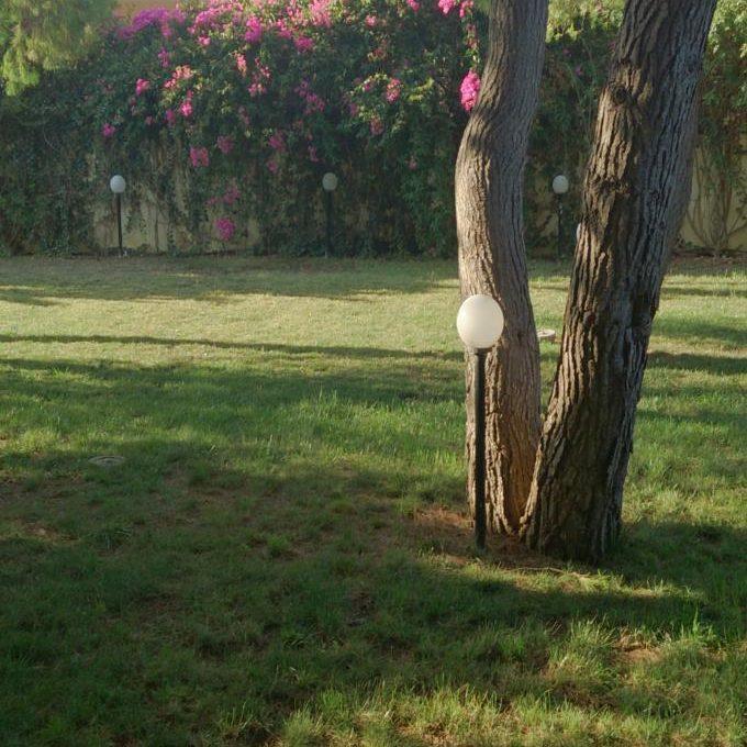 κήπος βορινή πλευρά (1)